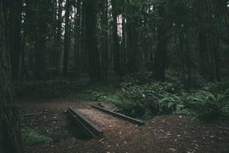 Dark path in woods