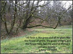 1 Peter 1_24-25a