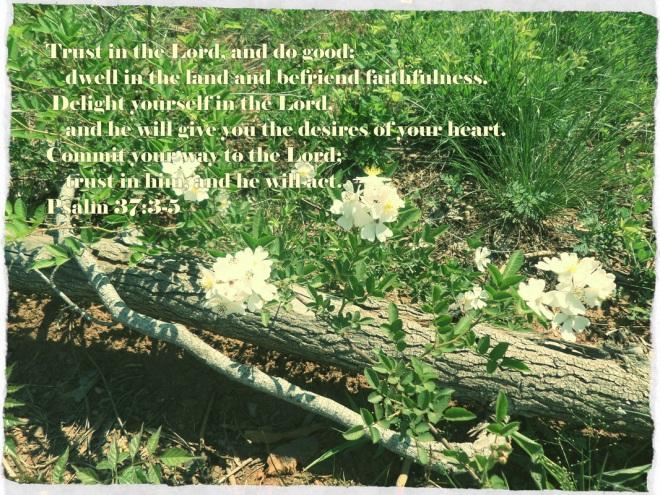 Psalm 37_3-5