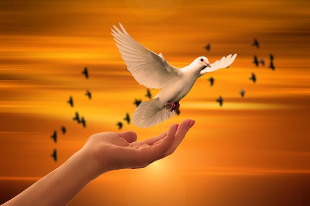 Hand with dove