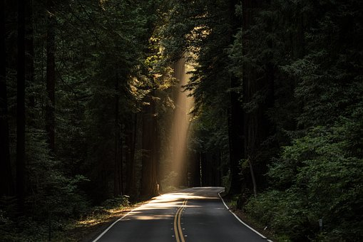 Daylight in forest