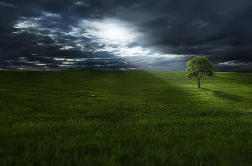 Shining on tree