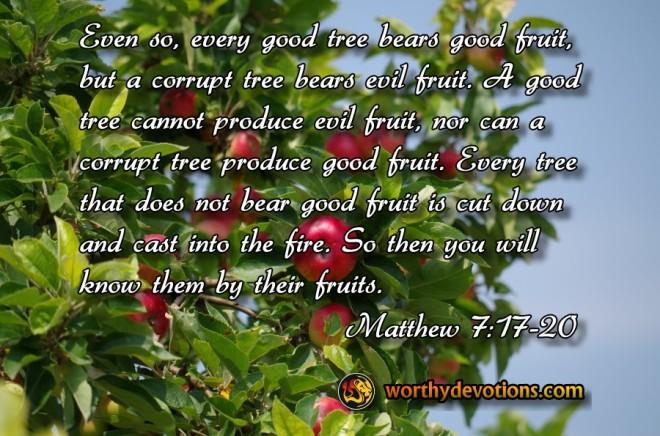 Matthew 7_17-20