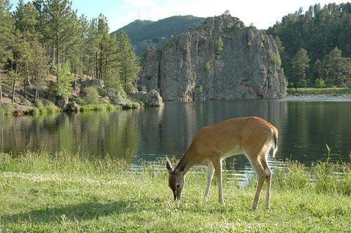 Nature deer lake