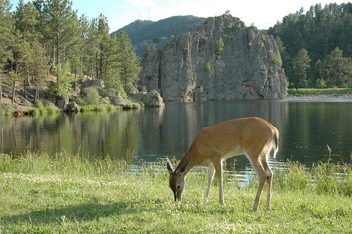 Nature deer lake