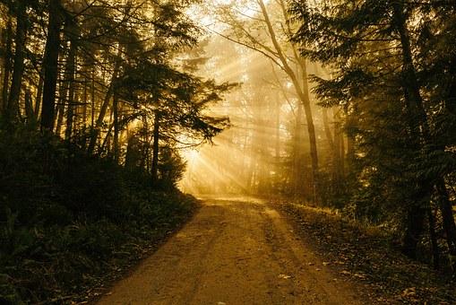 Sunbeam on road