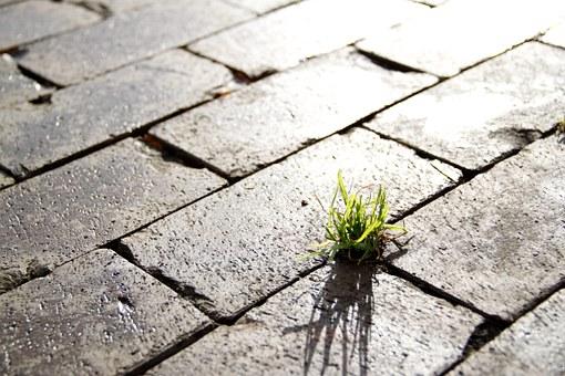 Grass in brick sidewalk