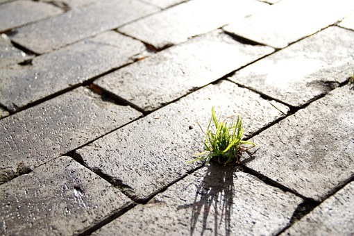 Grass in brick sidewalk