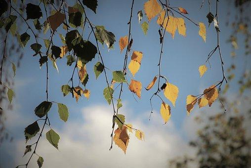 Autum twigs