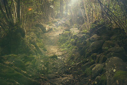 Rough path in forest