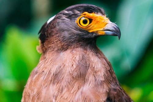 Bird looking