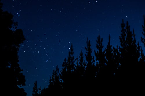 Bright stars over trees