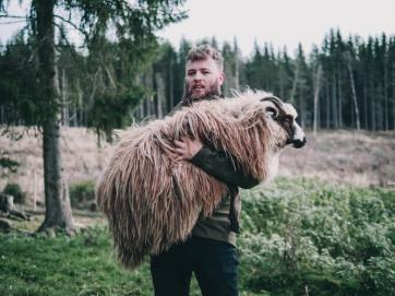 Holding sheep