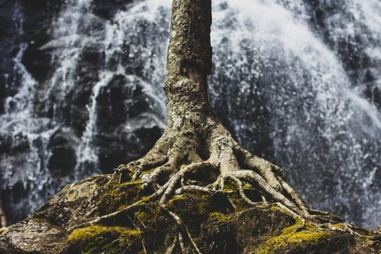 Tree by waterfall