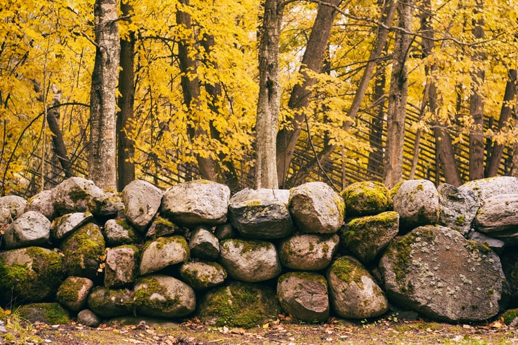 Rock wall in forest