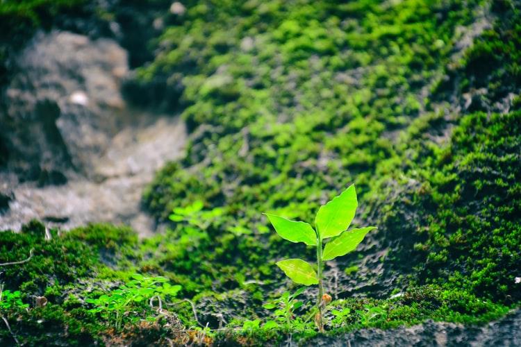 Green plan in field