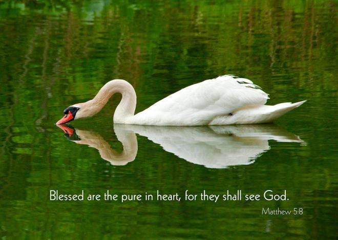 Matthew 5+8