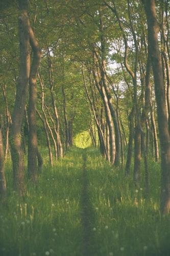 Narrow path among trees