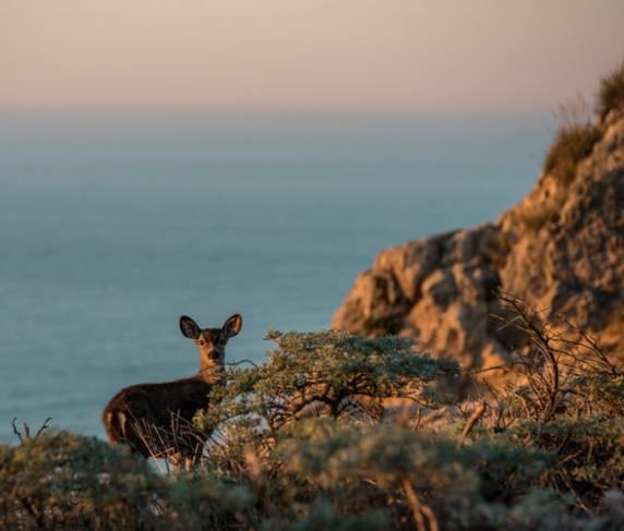 Deer on a cliff edge