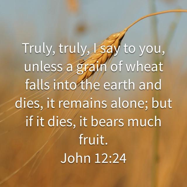 John 12_24